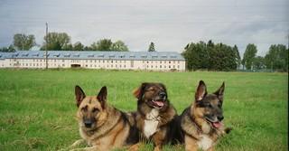 Treue Gefährten: Die Hunde der Bürgermeisterkandidatin