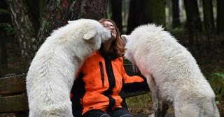So liebevoll die Tiere auch die ihrer Wolfsmutter sind, darf nicht vergessen werden, dass es sich hier um Raubtiere handelt.