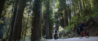 Der Redwood Nationalpark in den USA.