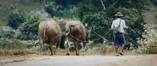 Viele Gegenden in Myanmar sind noch sehr ursprünglich.