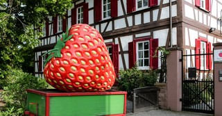 Wer es lieber etwas ruhiger angeht, der kann leckere Erdbeeren sammeln gehen bei Bauer Würfl.
