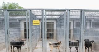 Rund 60 Hunde warten im Tierheim Gelnhausen noch darauf, eine neue Familie zu finden.