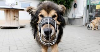 Auch Balou hat es sich im Tierheim gemütlich gemacht und wird aufgrund von Krankheit nicht mehr vermittelt.