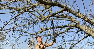 Der 64-Jährige verbringt gerne Zeit in der Natur - besonders auf seinem Obstbaumgrundstrück.
