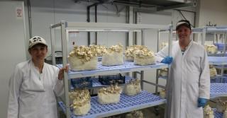 Der Pilzanbau bietet interessante Arbeitsmöglichkeiten für Menschen mit und ohne Handicaps.