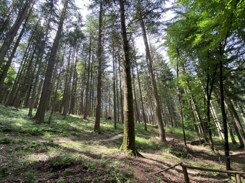 Dem Wald im Spessart geht es vergleichsweise gut