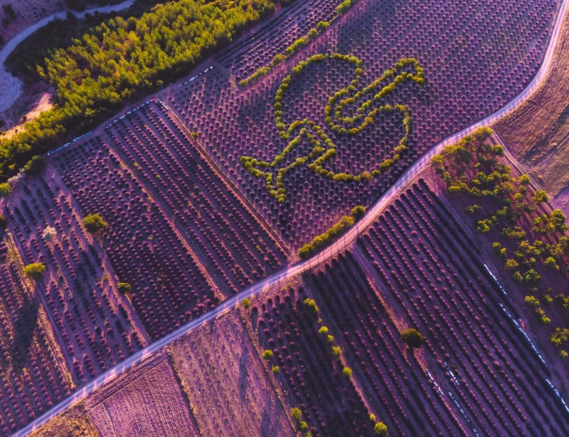 Lavendel, Löwenzahn, Quinoa – Die Landwirte pfl ügen und säen um die Wette und lassen so den Straussenvogel aufblühen.